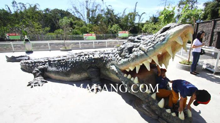 Demi Manjakan Wisatawan Predator Fun Park Impor Buaya Putih Surya
