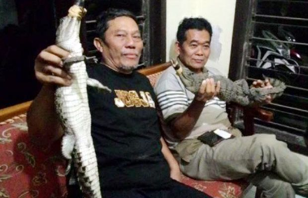 Peristiwa 10 Ekor Buaya Lepas Warga Kota Batu Resah Malang