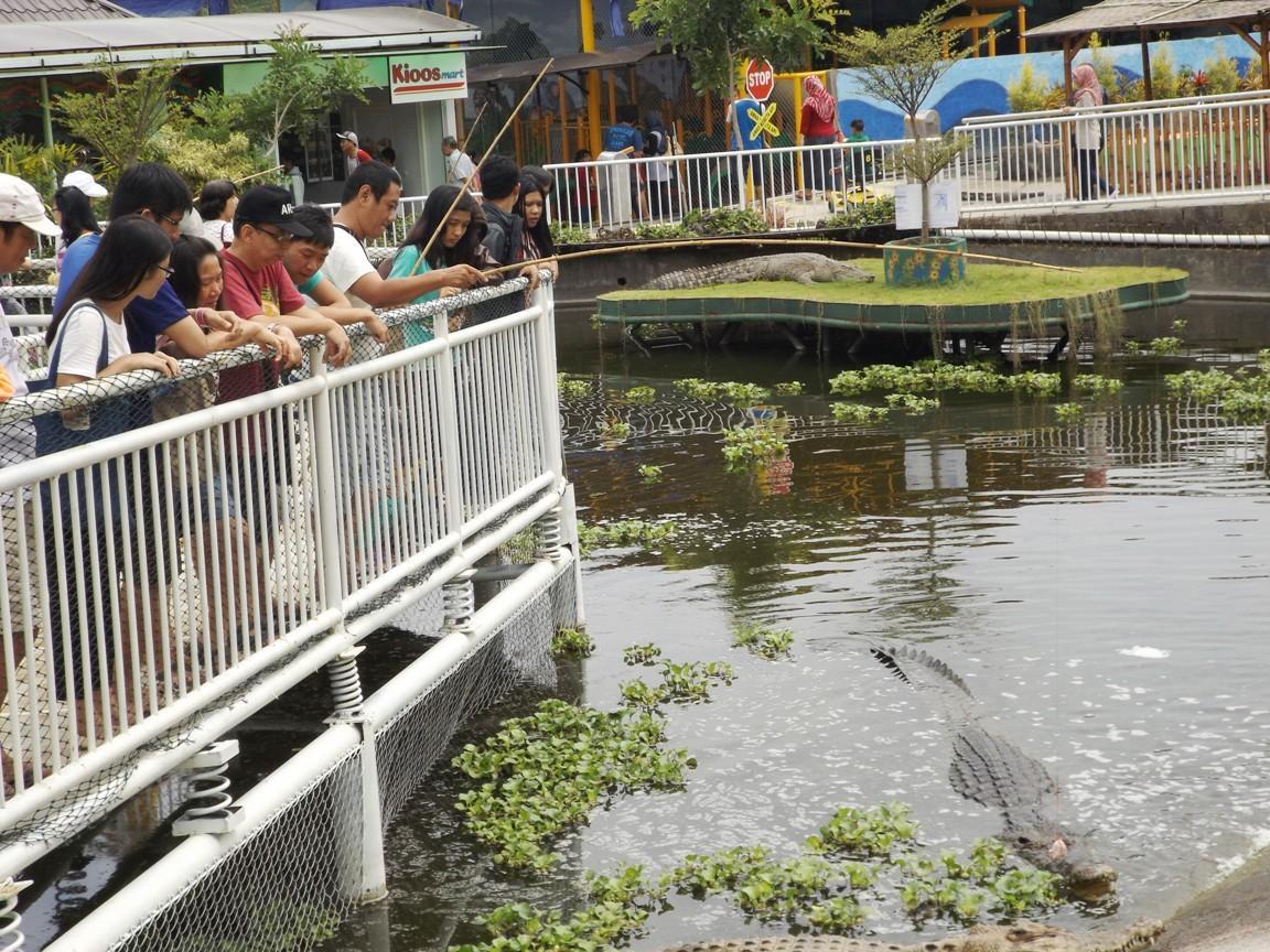 Predator Fun Park Obyek Wisata Batu Malang Xtranstravel Jam Buka