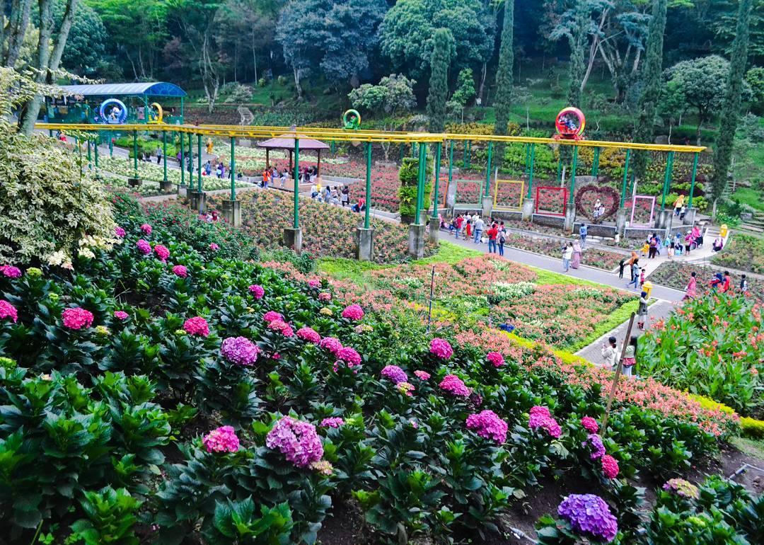 Selecta Malang Menikmati Musim Semi Ala Jepang Kota Batu Taman