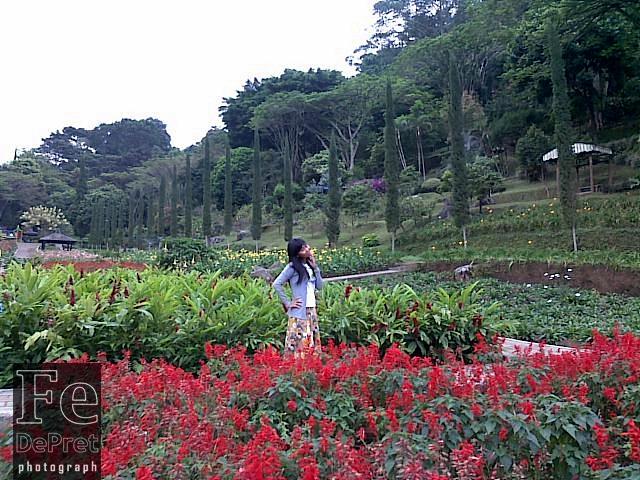 Taman Bunga Selecta Kota Batu Fettydepret Malang