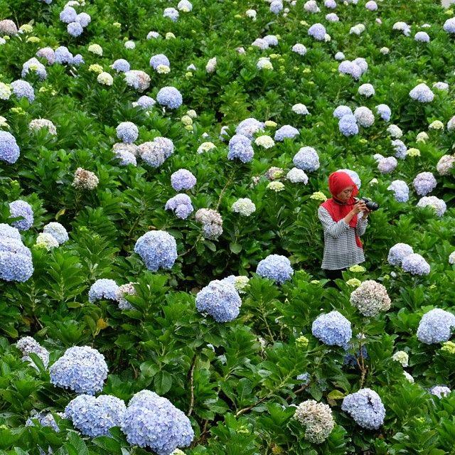 Taman Bunga Selecta Kota Batu Malang Jawa Timur Desa