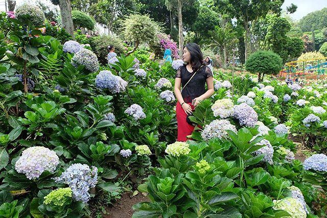 Taman Selecta Mengubah Kota Batu Bak Bunga Eropa Instagram