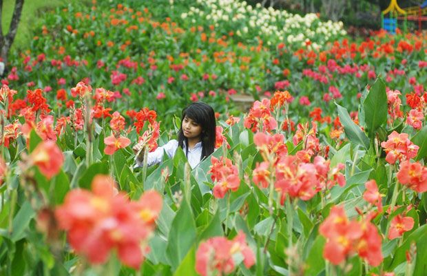 Wow Surga Bunga Kota Batu Jatim Times Wisata Keindahan Berada