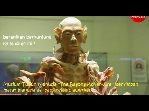 Bagong Adverture Museum Tubuh Manusia Mayat Asli Diawetkan Youtube Adventure