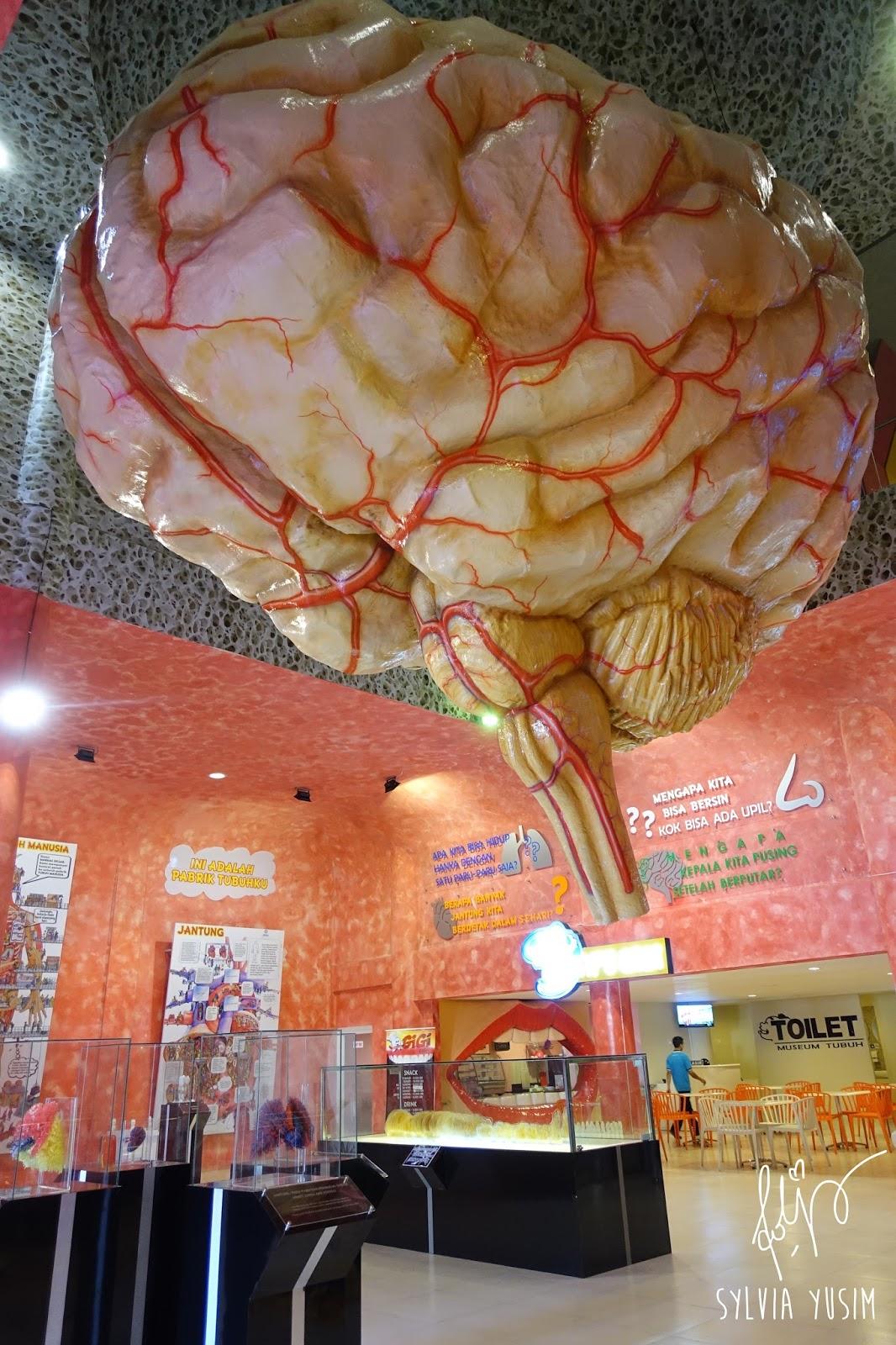 Mari Belajar Bagong Adventure Museum Tubuh Mermaid Prototipe Otak Raksasa
