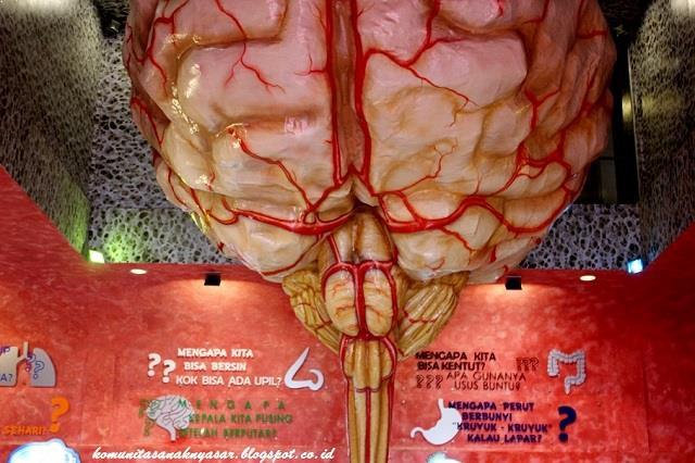 Menjelajahi Setiap Organ Manusia Museum Bagong Malang Ulinulin Sumber Foto