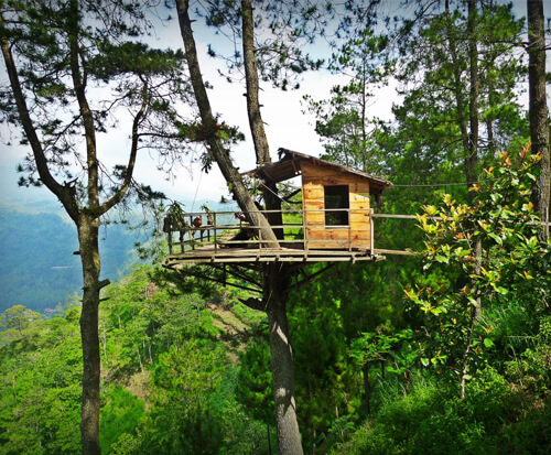 Omah Kayu Batu Sensasi Menggantung Pohon Pinus Malang Wisata Paralayang