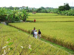 Bali Tour Destination Kertalangu Cultural Village Located Eastern Part Denpasar