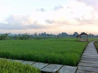 Desa Budaya Kertalangu Kesiman Denpasar Kota