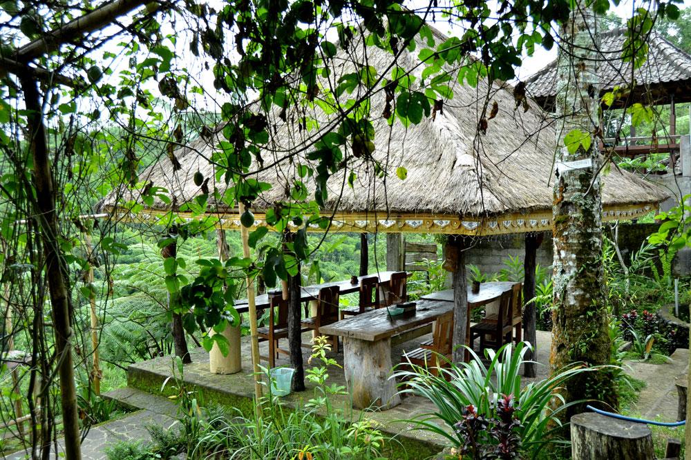 Bali Agro Tourism Products Luwak Coffee Tea Details Kebun Kopi