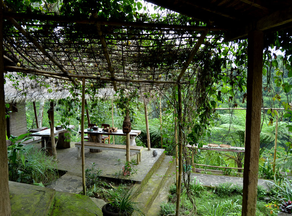 Bali Agro Tourism Products Luwak Coffee Tea Ubud Area Sanur