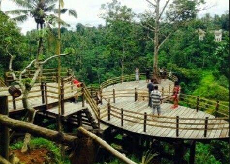 Bali Pulina Agro Tourism Ubud Pinterest Kebun Kopi Luwak Kota