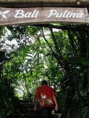 Bali Pulina Tempat Menikmati Kopi Luwak Bal Pariwisata Manual Tradisonal