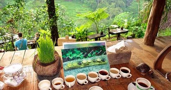 Jual Kopi Luwak Liar Arabica Robusta 081216876199 Wisata Bali Kebun
