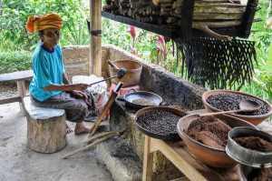 Mengintip Pengolahan Kopi Luwak Bali Pulina Wisata Kuliner Pengunjung Bisa