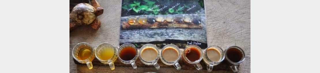 Unik Melestarikan Budaya Kopi Luwak Tradisional Kabardewata Kebun Bali Kota