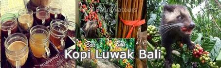 Wisata Kebun Kopi Bali Dewata Travel Luwak Pulau Kota Denpasar