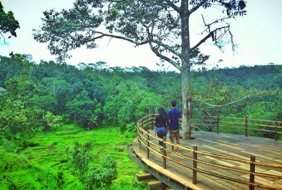 Wisata Kebun Kopi Ubud Peta Bali Info Tempat Luwak Kota