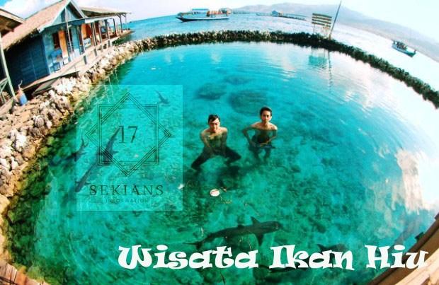 10 Objek Wisata Menarik Keren Denpasar Bali Ikan Hiu Pulau
