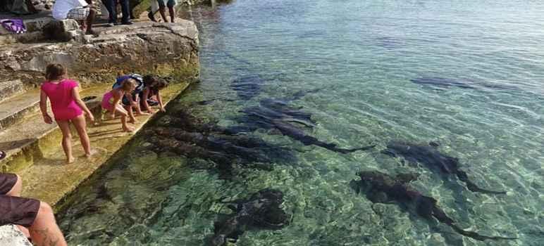 33 Tempat Wisata Denpasar Bali Terbaru Unik Menarik Murah Shark