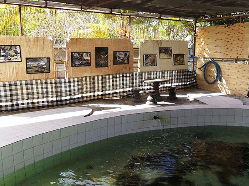 Kura Guide Informasi Wisata Bali Turtle Conservation Galeri Konservasi Penyu