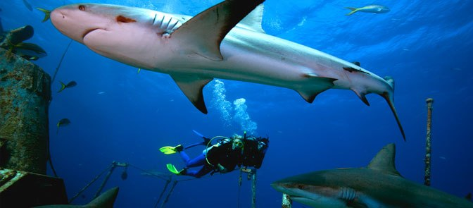 Objek Tempat Wisata Denpasar Menarik Kunjungi Bali Sharks Pulau Serangan