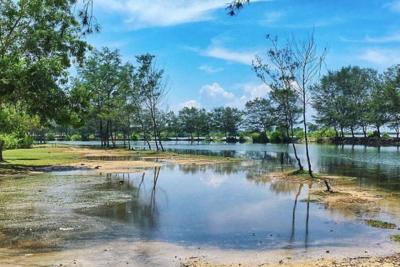 Wisata Alam Kota Denpasar Windu Saputra Pulau Serangan Bali Konservasi