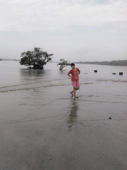 Objek Wista Pantai Mertasari Kota Denpasar Bali Mentari Pohon Bakau