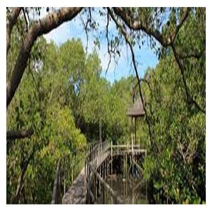 10 Tempat Wisata Denpasar Bali Patut Kamu Kunjungi Hutan Mangrove