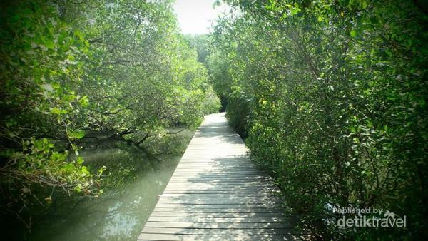 Beda Bali Wisata Hutan Mangrove Bakau Lebat Ditemani Jembatan Tertata