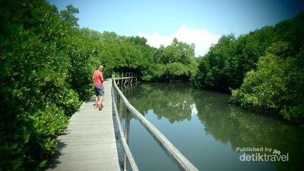 Beda Bali Wisata Hutan Mangrove Lidi Biru 67 Bakau Kota