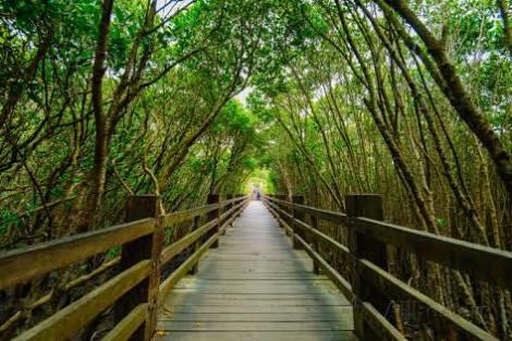 Bersantai Menikmati Wisata Hutan Bakau Bali Mangrove Kota Denpasar