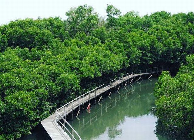 Bosan Pantai Wisata Mangrove Bali Aja Okezone Lifestyle Https Img