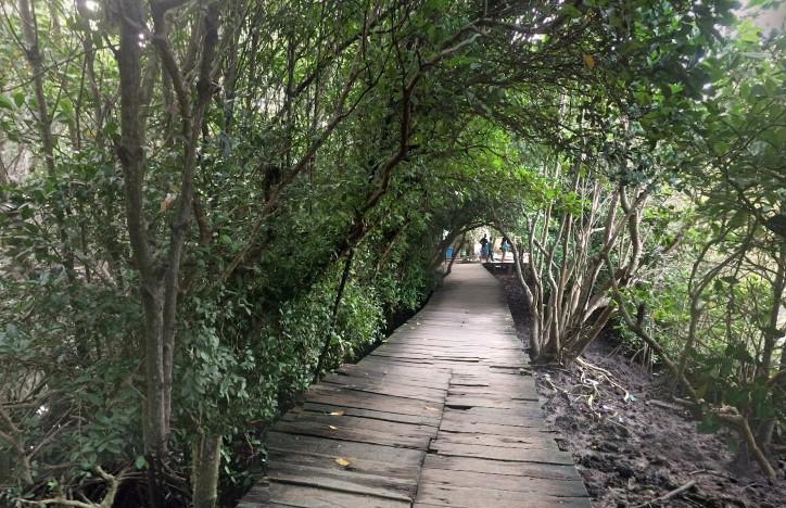 Daya Tarik Objek Wisata Hutan Mangrove Bali Denpasar Sarankan Mencari
