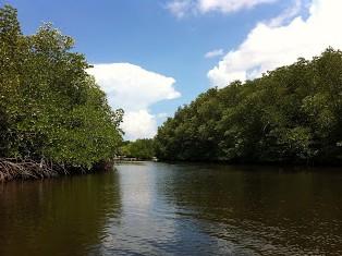 Destinasti Keindahan Wisata Hutan Mangrove Lembongan Nusapenida Klungkung Bali Bakau