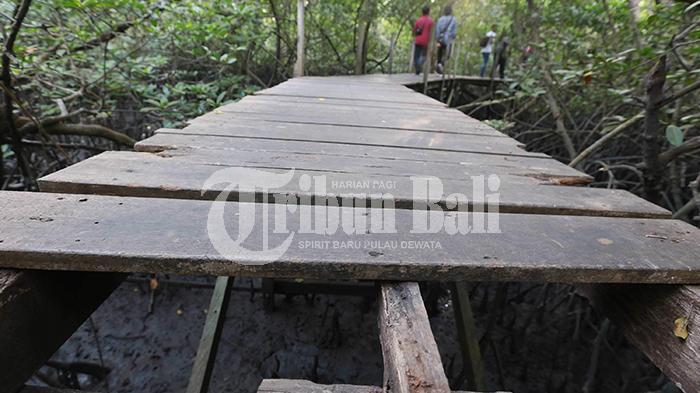 Fasilitas Objek Wisata Hutan Mangrove Rusak Tribun Bali Rizal Fanany