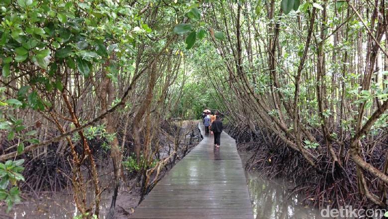 Hutan Mangrove Bali Alternatif Wisata Sarat Edukasi Denpasar Zainal Detiktravel