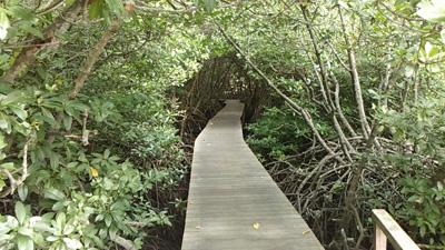Hutan Mangrove Bali Ayo Transport Bukan Jembatan Fasilitasi Tapi Adalagi