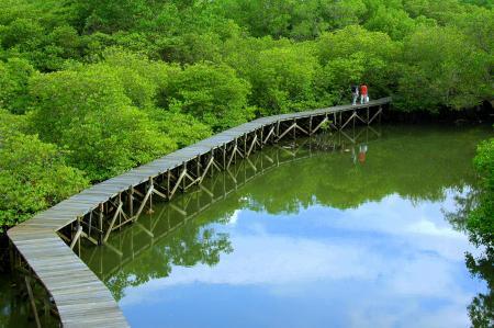 Hutan Mangrove Bali Beauty Indonesia Berada Kawasan Suwung Kauh Denpasar