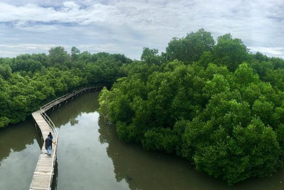 Hutan Mangrove Bali Denpasar Punapi Kuta Kota Wisata Bakau