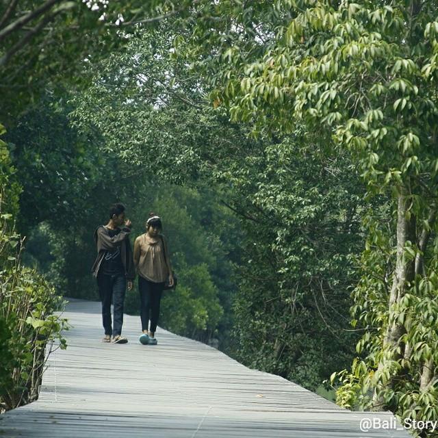 Hutan Mangrove Bali Instagram Mengenal Lebih Dekat Objek Wisata Bakau