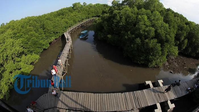 Hutan Mangrove Bali Pingin Nikmati Suasana Denpasar Coba Datang Wisata