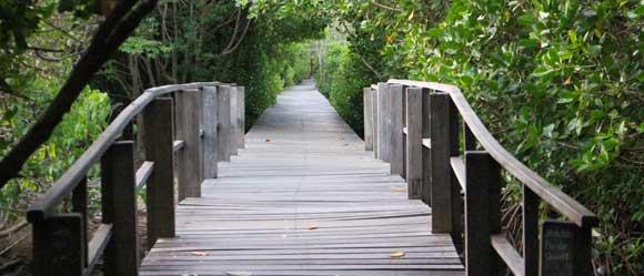 Hutan Mangrove Bali Wisata Bakau Biaya Tiket Masuk 2018 Kota