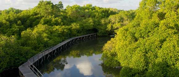 Hutan Mangrove Bali Wisata Bakau Biaya Tiket Masuk 2018 Sebagai