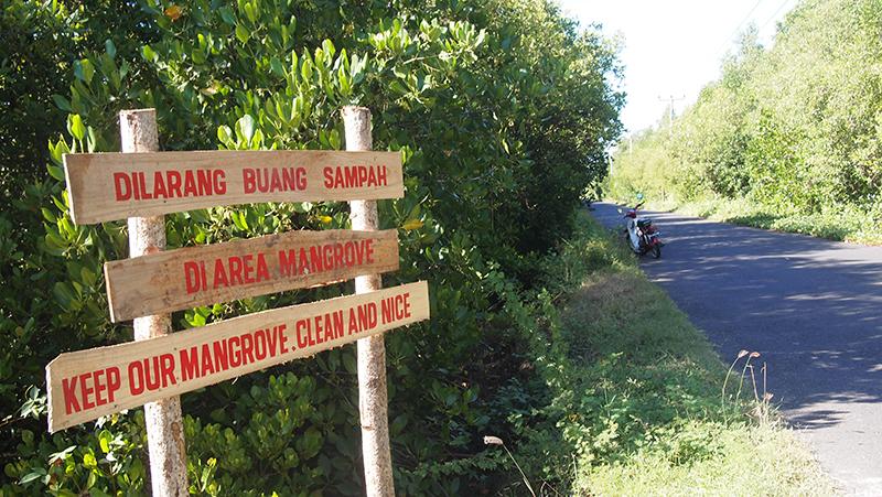Hutan Mangrove Budeng Perancak Potensial Jadi Wisata Alam Edukasi Bali