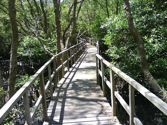 Hutan Mangrove Denpasar Bali Info Tempat Wisata Indonesia Bakau Kota
