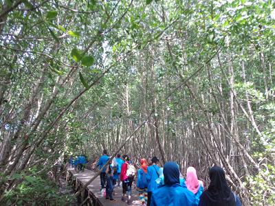 Hutan Mangrove Sebagai Tempat Wisata Belajar Bali Bakau Kota Denpasar