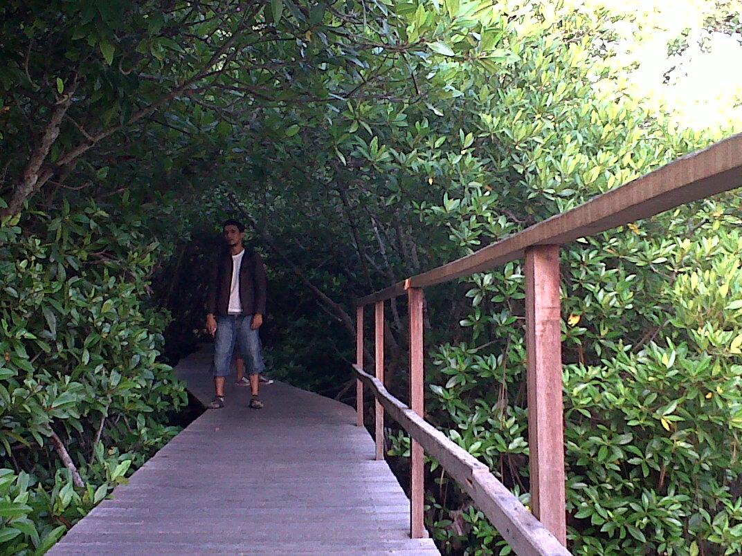 Hutan Mangrove Wisata Edukasi Denpasar Bali Sempatkanlah Mampir Bersama Keluarga