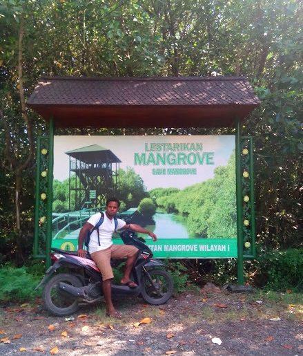 Keindahan Wisata Hutan Mangrove Bali Puteriputeri Bakau Kota Denpasar